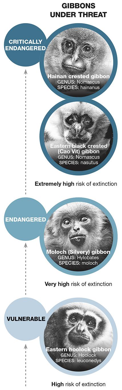 """""""Gibbons"""""""